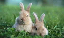 Mensen zijn net konijnen